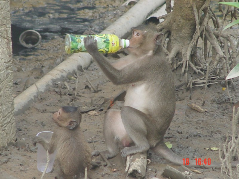 Tour Đảo Khỉ - Cần Giờ 1 Ngày