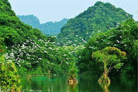 Tour du lịch Hoa Lư- Tam cốc- Vườn Chim Thung Nham 2 ngày 1 đêm